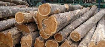 nigeria-teak-wood-logs-1731913